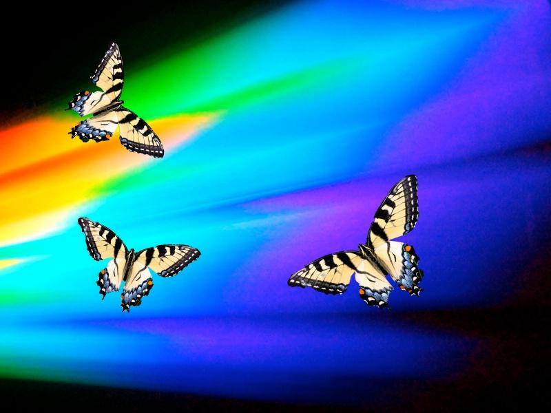 """""""Butterfly Heaven"""""""