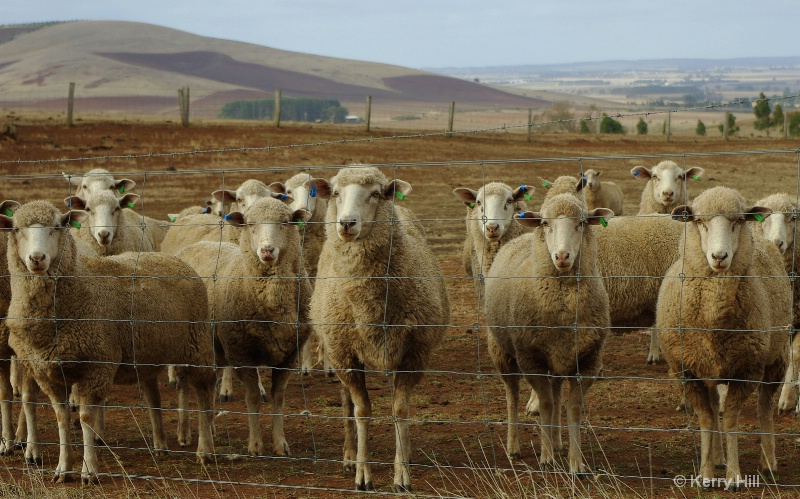 What are Ewe's looking at?