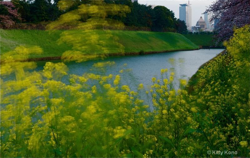 Yellow Weeds of Spring - Tokyo - ID: 8257127 © Kitty R. Kono