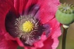 Flower n Bee