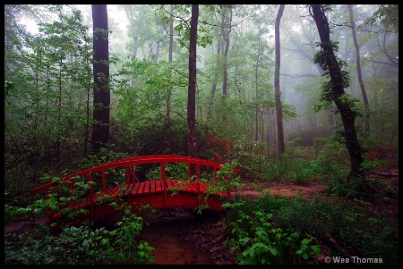 Red Bridge in the Forest.