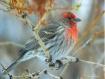 Bird in a Bush!