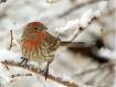 Bird in Snow!