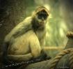 Safari Monkey I