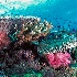 © Edward Dorson PhotoID # 8321939: Reef Scenic 12