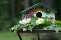 Bird House with Full Auto Setting