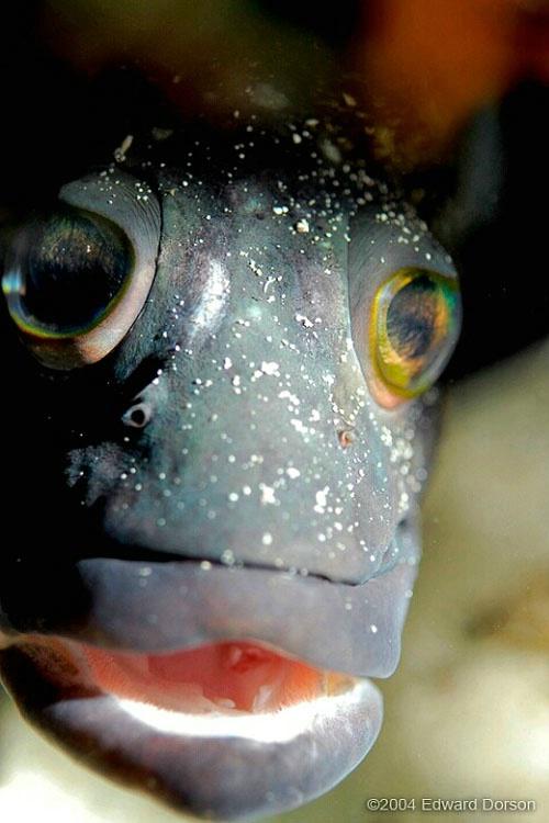 Fish Face - ID: 8331934 © Edward Dorson