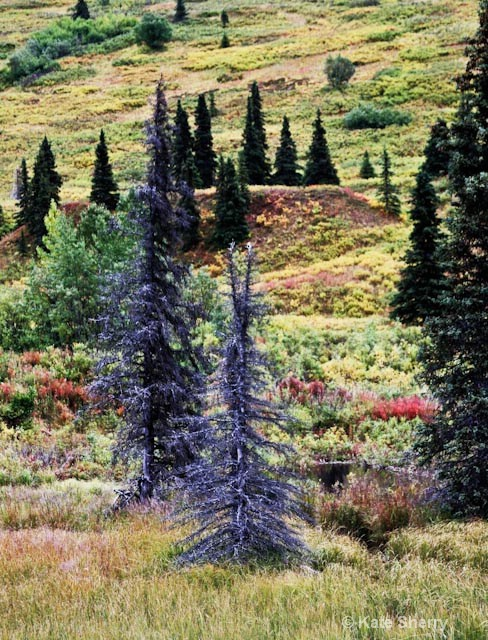 tundra colors trees and hillside - ID: 8339146 © Katherine Sherry