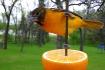 Orange You Glad t...