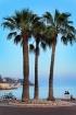 Riviera Romance
