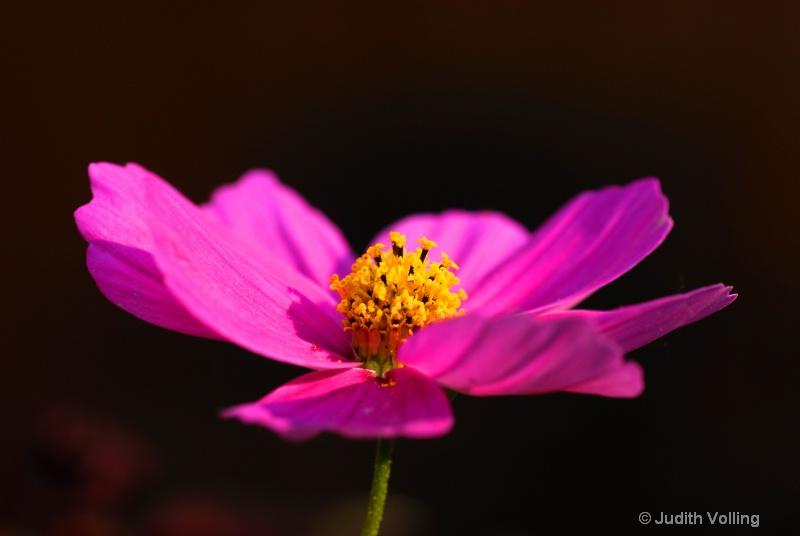 F32 - ID: 8350943 © Judy A. Volling