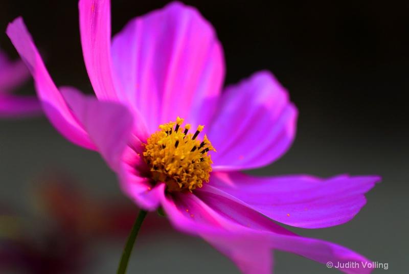 F26 - ID: 8350967 © Judy A. Volling