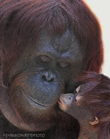 Kiss Of Life 2