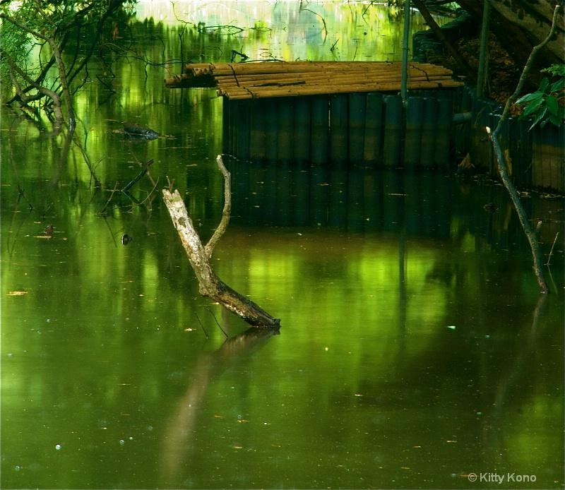 Bamboo and Driftwood at Meiji Shrine Garden Pond - ID: 8379473 © Kitty R. Kono