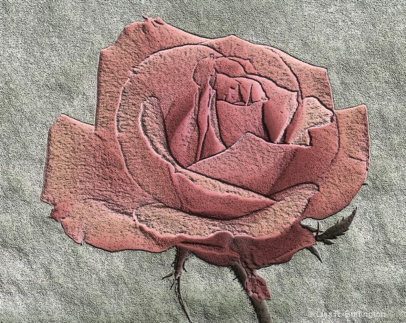 Pink Rose - ID: 8380068 © Lisa R. Buffington