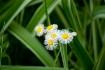 Flowers In Grass