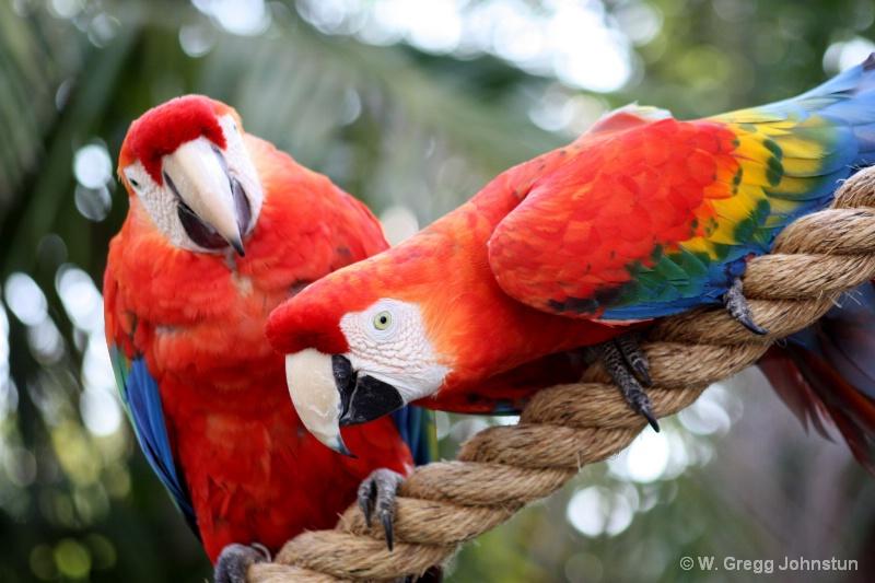 Color Twins