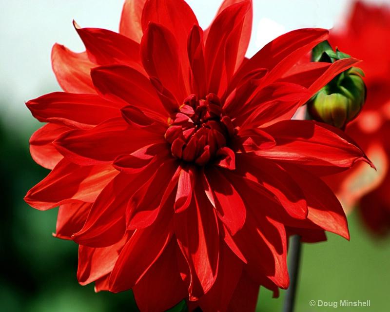 Vibrant Red - ID: 8409714 © Douglas R. Minshell
