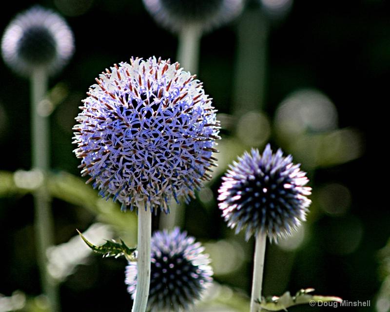Powerscourt Spheres - ID: 8409716 © Douglas R. Minshell