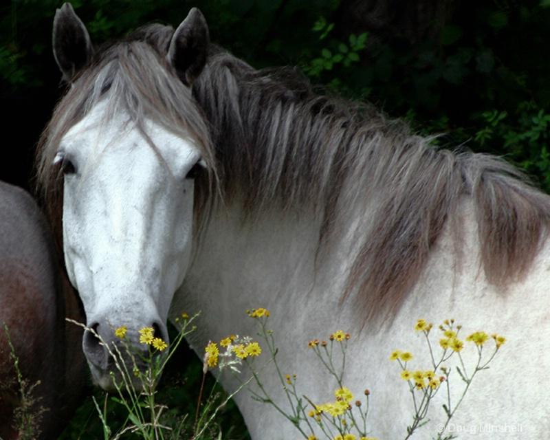 Ghost Horse - ID: 8409724 © Douglas R. Minshell