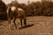 Horse Country_Poc...