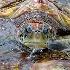 © Douglas R. Minshell PhotoID# 8411420: Green Sea Turtle