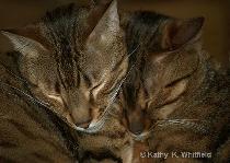 Brotherly Love, Tora And Tama