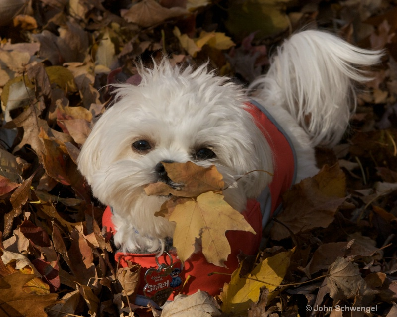 chase in the leaf pile