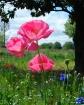Like Paper Flower...