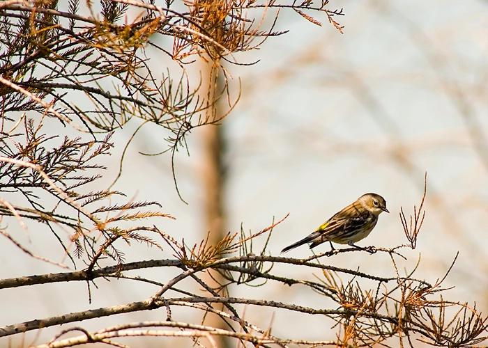 Parkway Bird