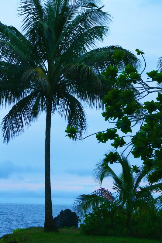 ~ Island Paradise ~ - ID: 8457251 © Trudy L. Smuin