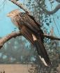 Bronx Bird