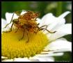 Mmmmmm Pollen ;-)