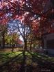 Fall shadows...