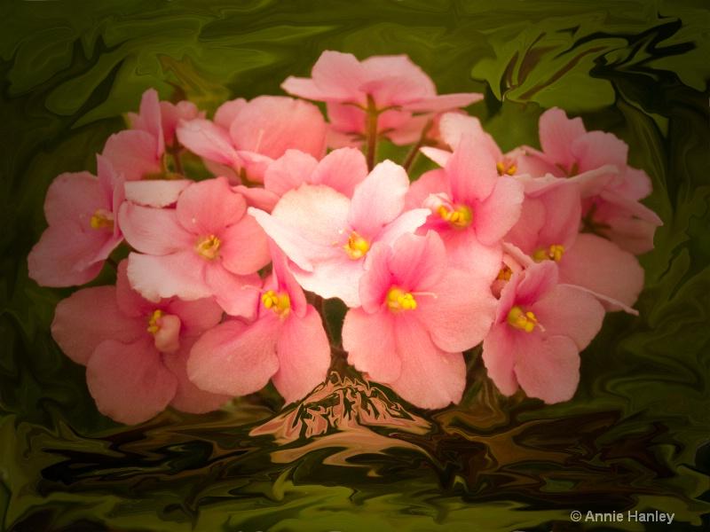 African Violets - ID: 8481204 © Ana Hanley