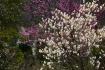 Brookside Spring ...