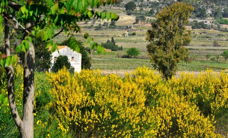 Spanish wine country