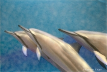 Three Spinner Dolphins, hand colored