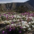 © Douglas R. Minshell PhotoID# 8521896: Coyote Canyon Color
