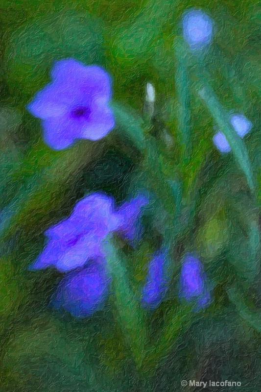 Impasto Impressionism - ID: 8529967 © Mary Iacofano