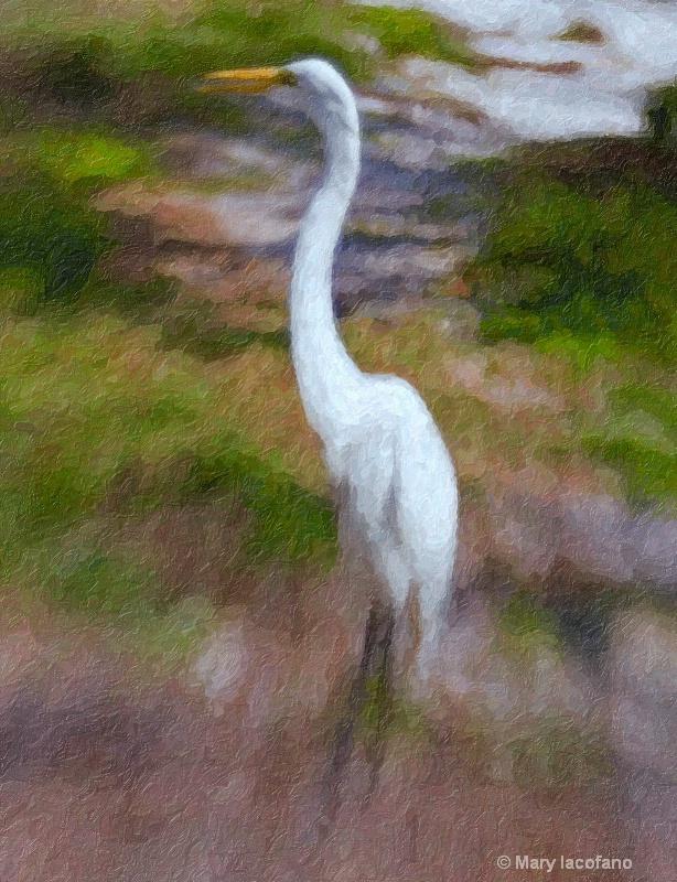 Great White Egret - ID: 8530238 © Mary Iacofano