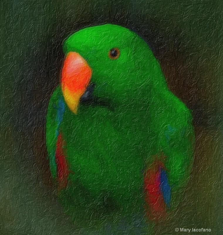 Pretty Bird - ID: 8536114 © Mary Iacofano