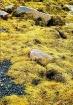 Seaweed at Blue R...