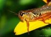 Grasshopper Couch...