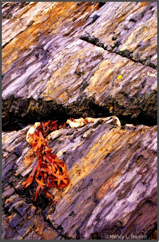 Still Life with Kelp