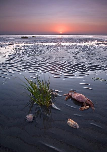 Beach - ID: 8559584 © William C. Dodge