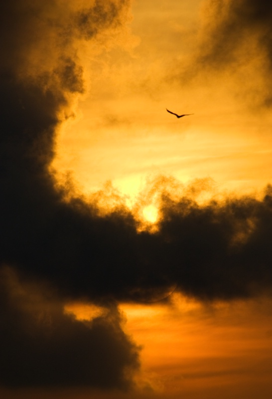Sunrise Pine Island - ID: 8560198 © Michael Cenci
