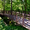 Bridge in Dappled...