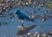 Blue Bird reflect...