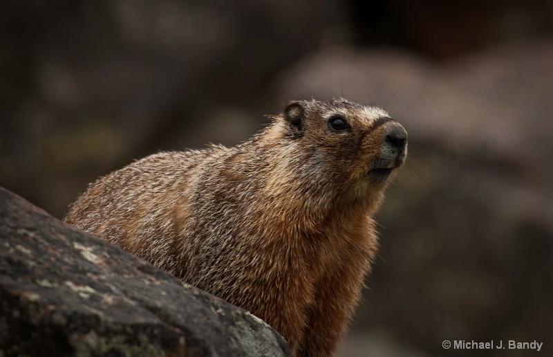 Marmot 1